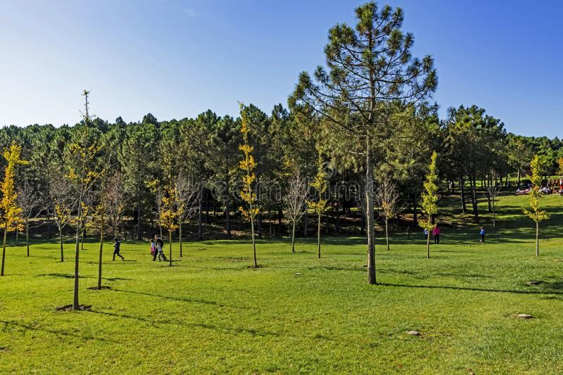 International Istanbul Urban Forest and park established on 5 million square meters. Nature royalty free stock images