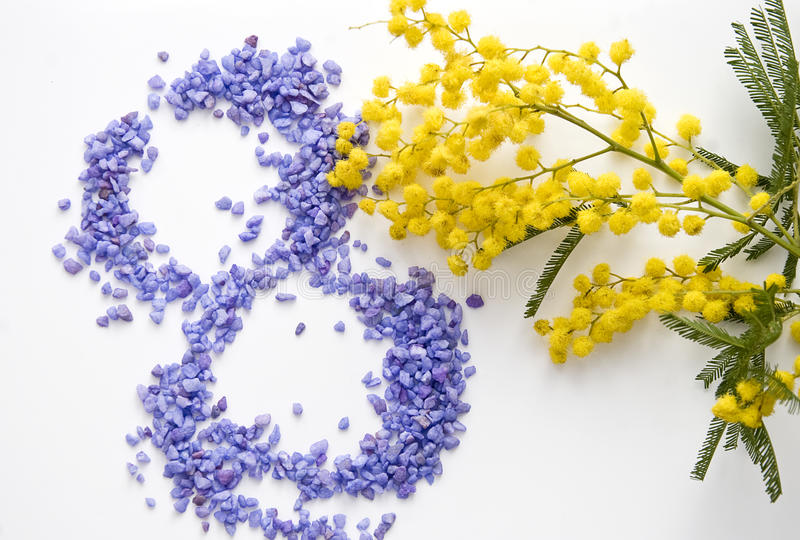International Women's Day mimosa flower stock photo