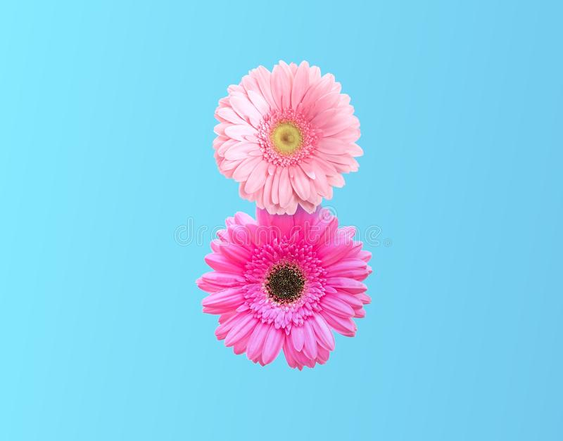 International Women`s Day. number 8 in the style of pink flower. On pastel blue background. minimal idea nature. An idea creative to Flyer for March 8 with the royalty free stock photos
