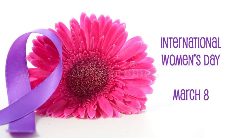 International Women`s Day pink gerbera with symbolic purple ribbon. On white wood table royalty free stock photo