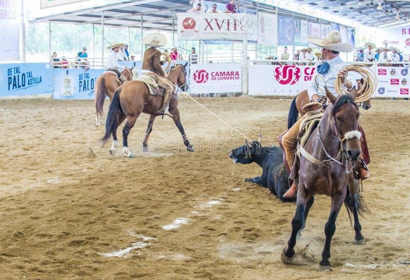 Internationell mariachi- & Charros festival royaltyfria bilder