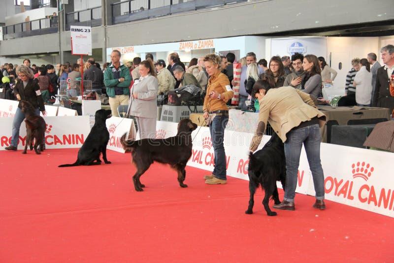 internationell show för hund fotografering för bildbyråer