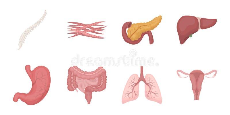 Interne organen van menselijke pictogrammen in vastgestelde inzameling voor ontwerp vector illustratie