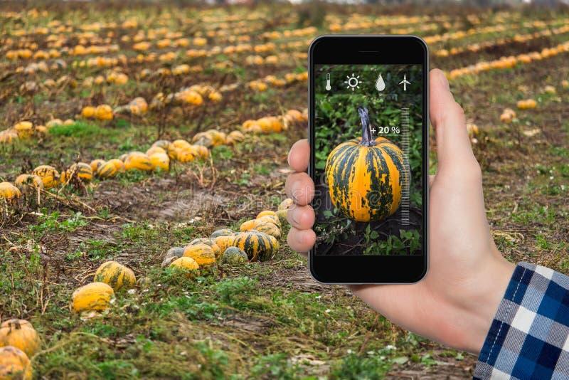 Internet des choses dans l'agriculture photos stock