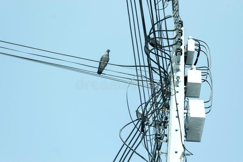 Internet-Kabel auf Pfosten und elektrischer Draht unter blauer Himmel backgro lizenzfreie stockfotografie