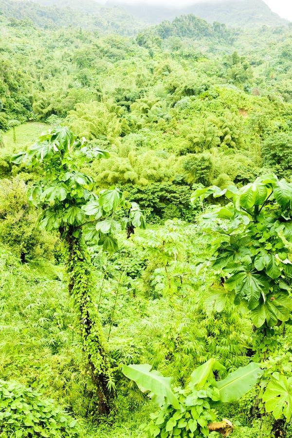 Download Interno de Grenada foto de stock. Imagem de outdoor, paisagens - 12810342