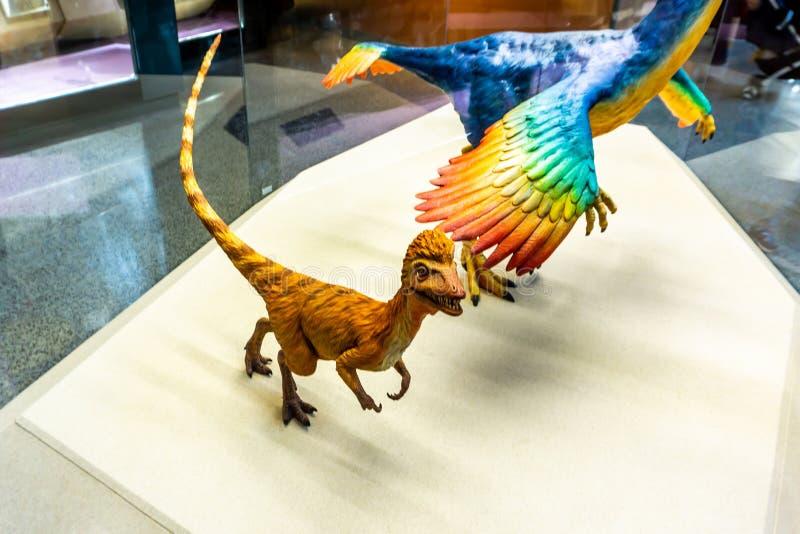 Interno 8 del museo di storia naturale di Shanghai immagini stock
