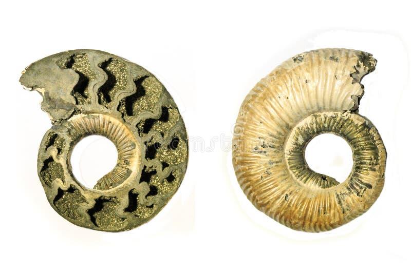 Interno ed esterno di un'ammonite fossilizzata fotografia stock libera da diritti