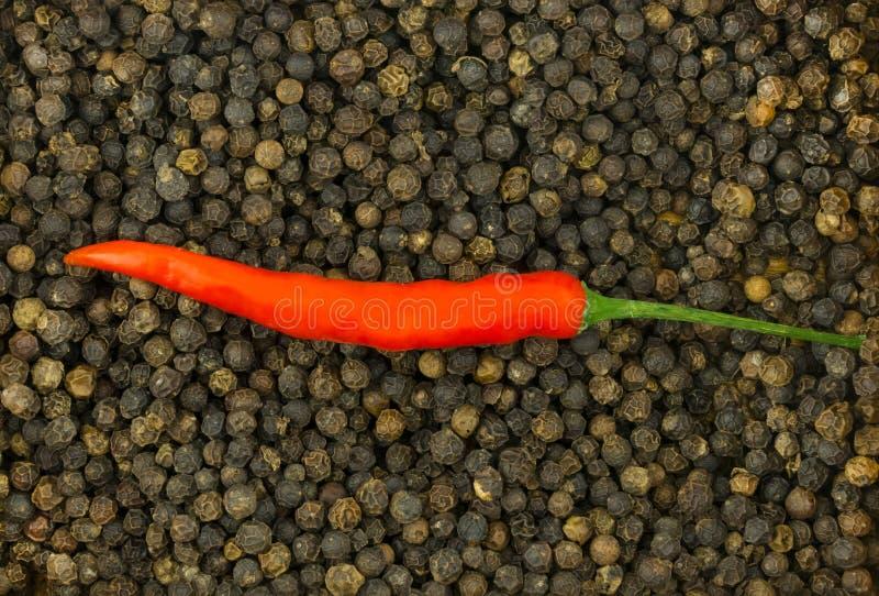 Intero baccello del peperoncino rosso rosso su un fondo di pepe nero piccante manifesto culinario di progettazione del modello di fotografia stock libera da diritti