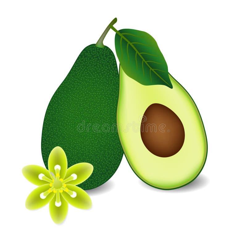 Intero di avocado con la foglia, la fetta ed il fiore illustrazione di stock