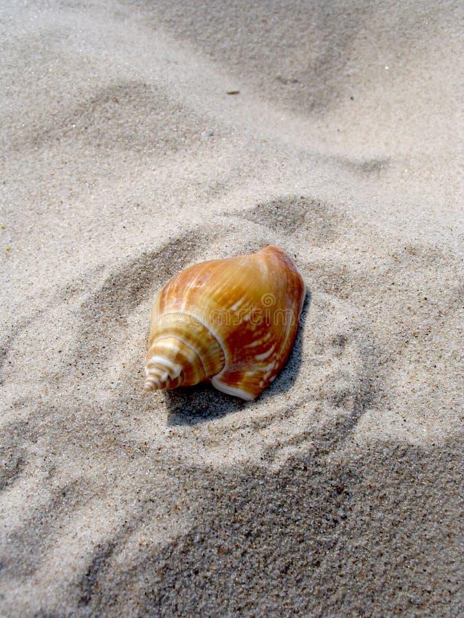 Download Interpréteur De Commandes Interactif Image stock - Image du escargot, sable: 734135