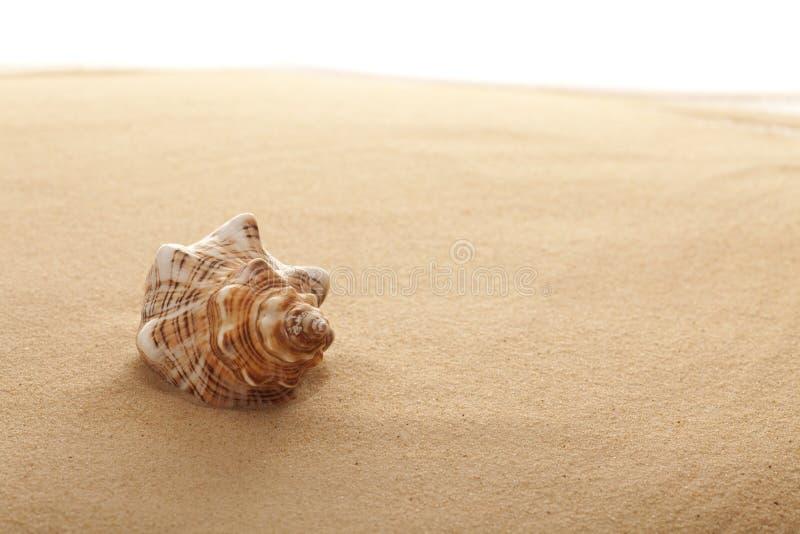 Interpréteur de commandes interactif de conque sur la plage photo stock
