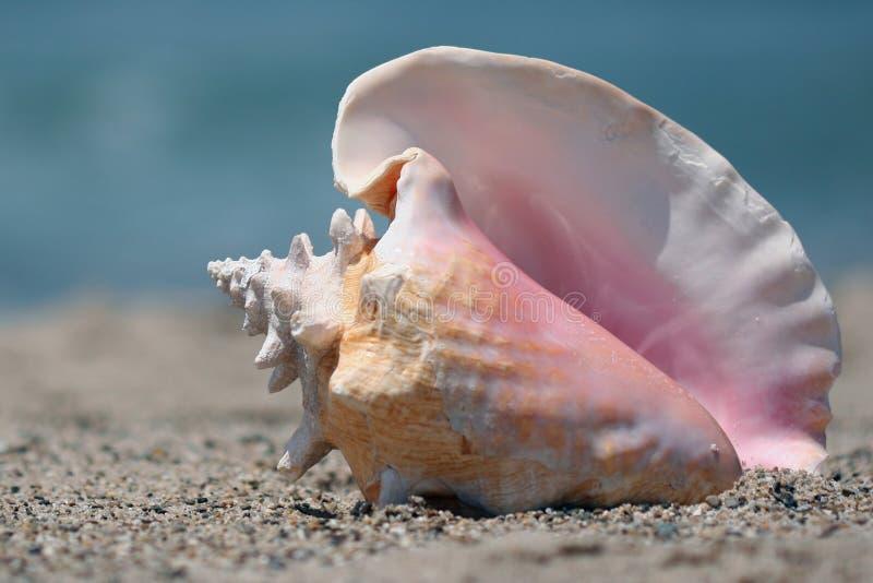 Interpréteur de commandes interactif de conque sur la plage photographie stock libre de droits