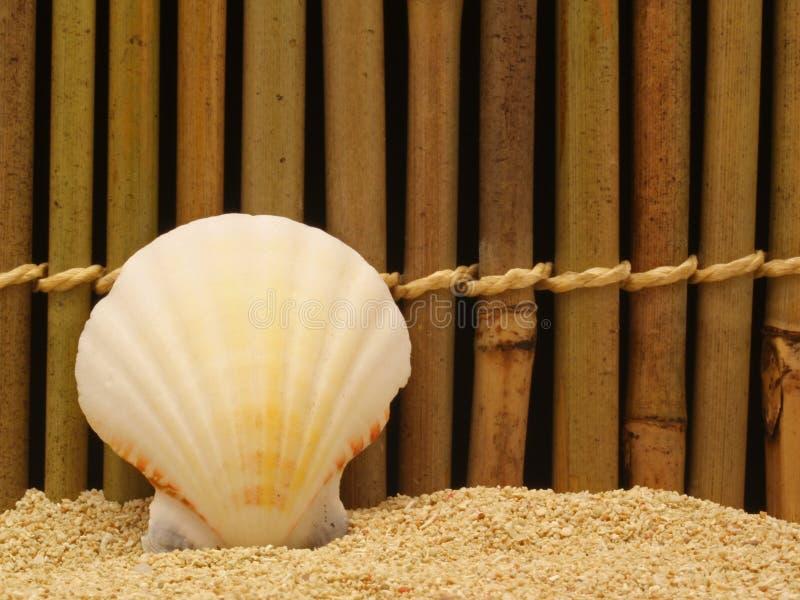 Download Interpréteur De Commandes Interactif De Mer Photo stock - Image du nature, plage: 745524