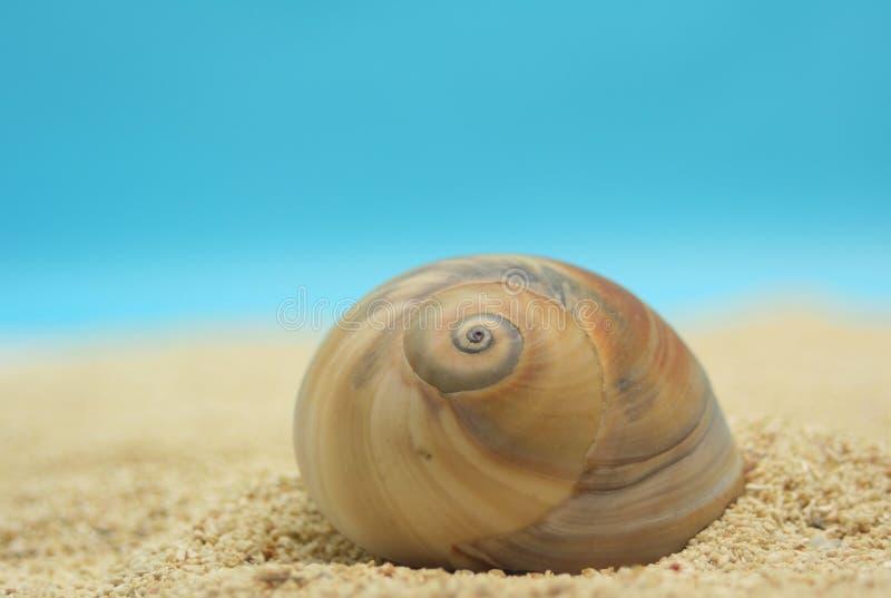 Interpréteur de commandes interactif de mer photo libre de droits