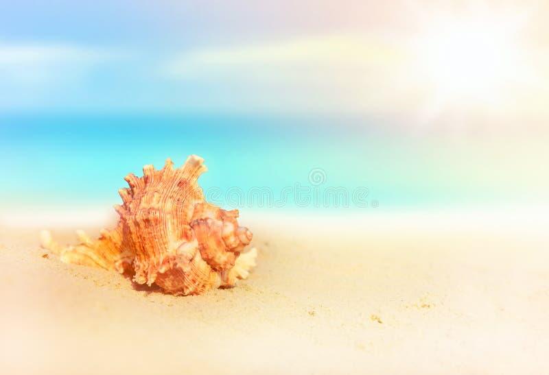 Interpréteur de commandes interactif de mer sur la plage sablonneuse image libre de droits