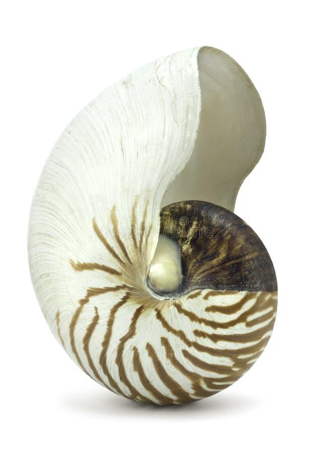 Interpréteur de commandes interactif de Nautilus sur le blanc photographie stock