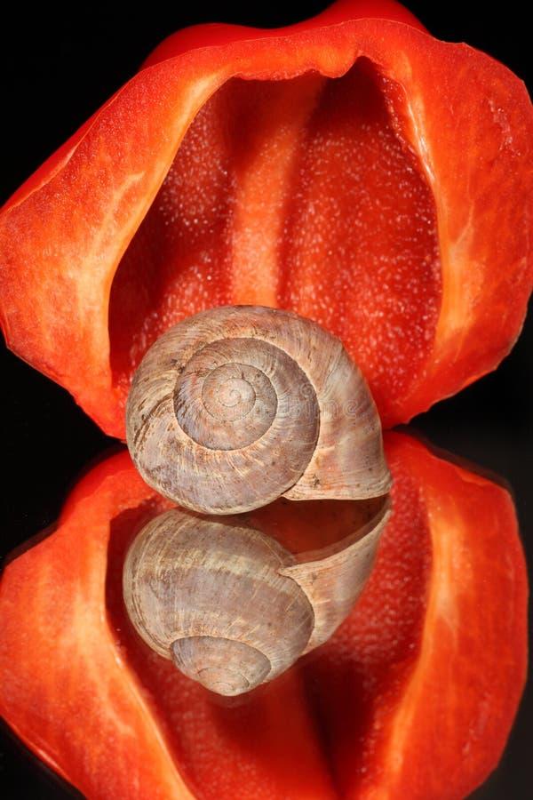 Interpréteur de commandes interactif de poivron rouge et d'escargot images stock
