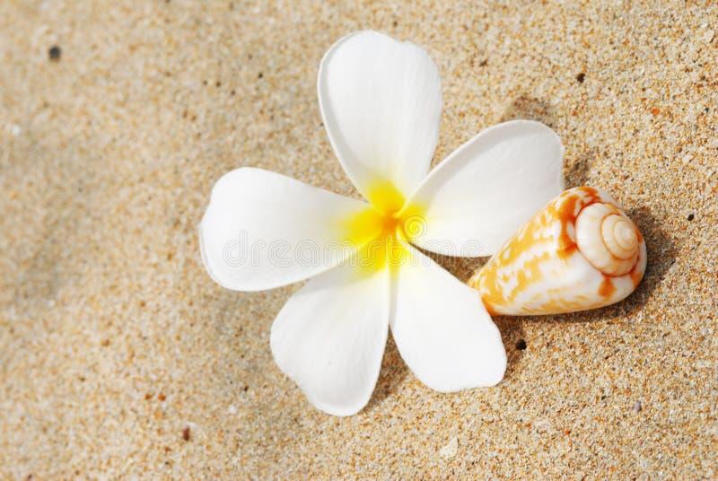 Interpréteur de commandes interactif et fleur sur une plage image stock