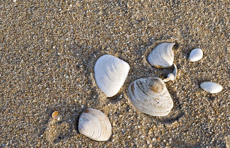 Interpréteurs de commandes interactifs de mer sur la plage photos stock