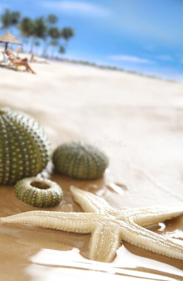 interpréteurs de commandes interactifs de plage photos libres de droits