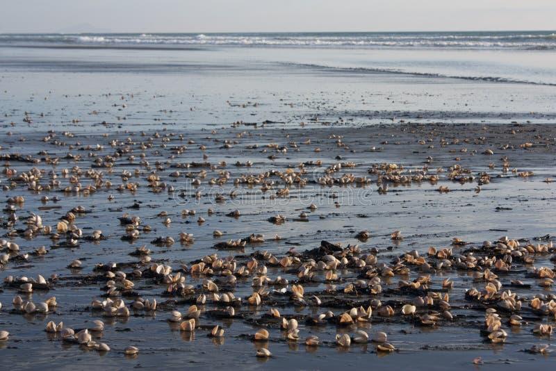 Download Interpréteurs De Commandes Interactifs Sur La Plage Photo stock - Image du rivage, ouvert: 45359152