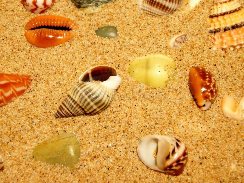 Interpréteurs de commandes interactifs sur la plage de sable photo stock