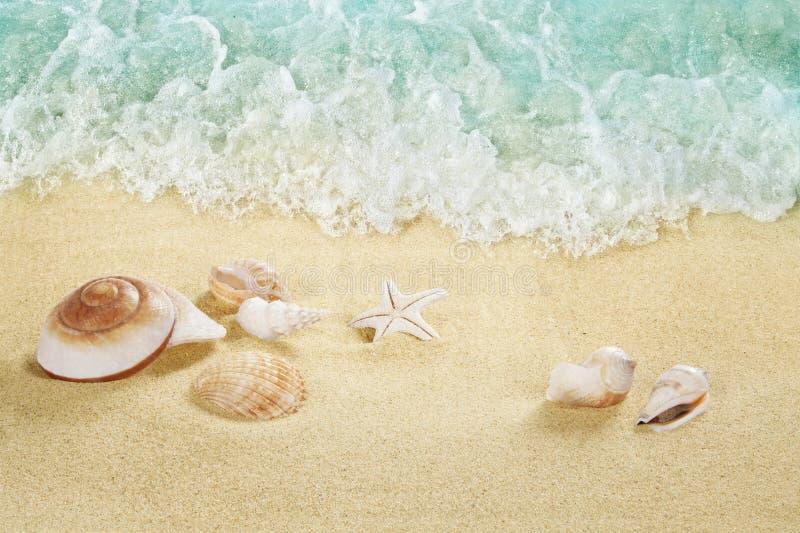 Interpréteurs de commandes interactifs sur la plage Mer tropicale image stock