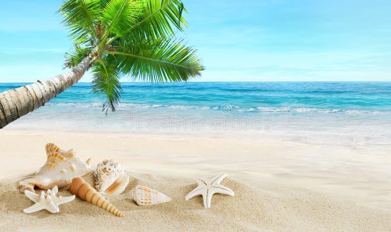Interpréteurs de commandes interactifs sur la plage Mer tropicale Vieille carte postale, conception dans le type grunge et rétro photo stock