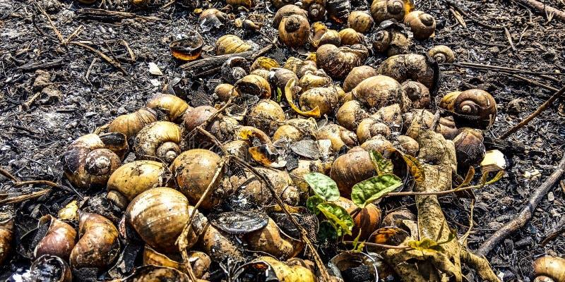 Interpr?teur de commandes interactif d'escargot photographie stock libre de droits