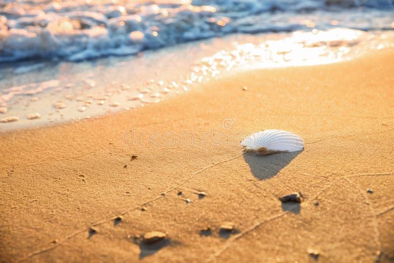 Interpr?teur de commandes interactif de mer sur la plage sablonneuse photographie stock