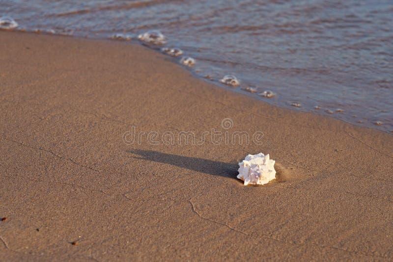 Interpr?teur de commandes interactif de mer sur la plage sablonneuse images libres de droits
