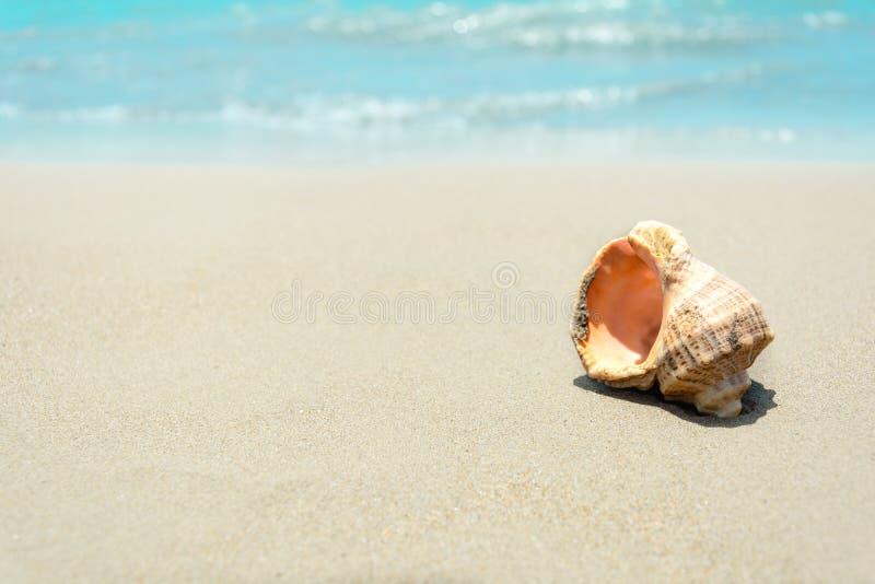 Interpr?teurs de commandes interactifs sur la plage sablonneuse Fond tropical Voyagez et d?tendez le concept images libres de droits