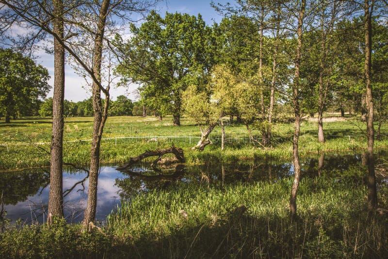 Interrupção do meandro de um rio foto de stock royalty free