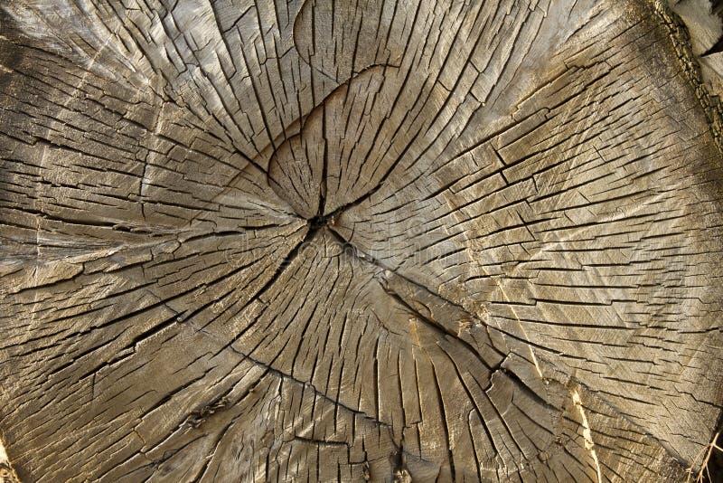 Interseção Grande Da árvore Foto de Stock