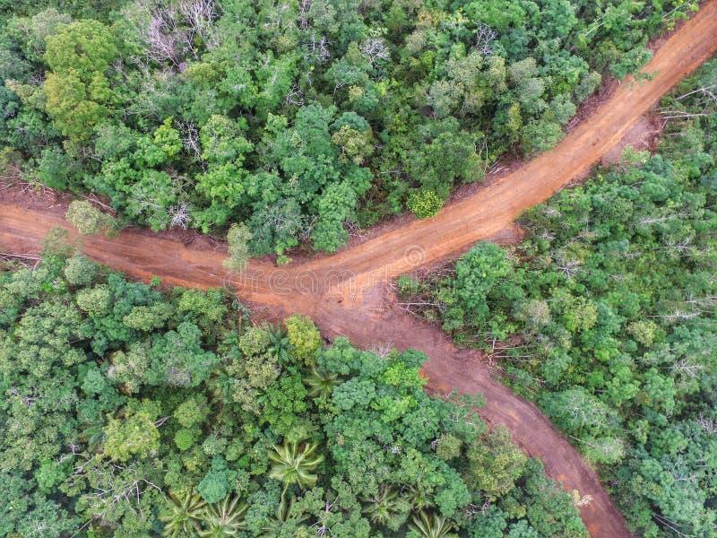 Interseção na floresta tropical, Simpang Teritip imagem de stock