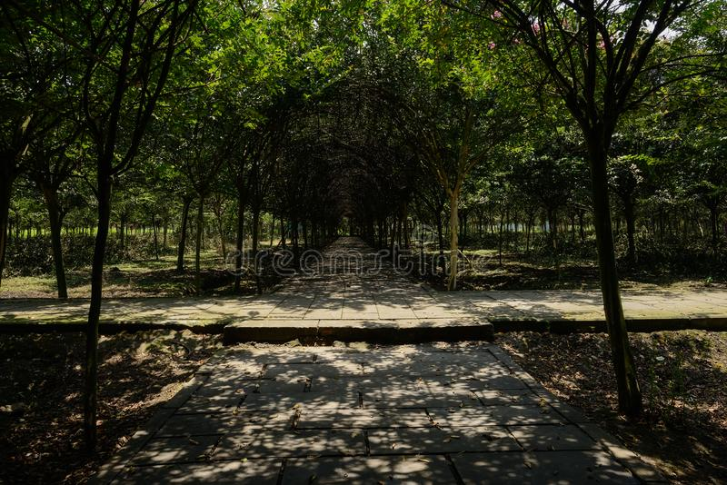 Intersection of shady paths in sunny summer afternoon. Intersection of shaded paths in sunny summer afternoon,Chengdu,China stock photo