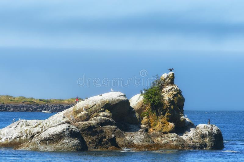 Intertidal Rotsen in Tillamook-Baai royalty-vrije stock afbeelding