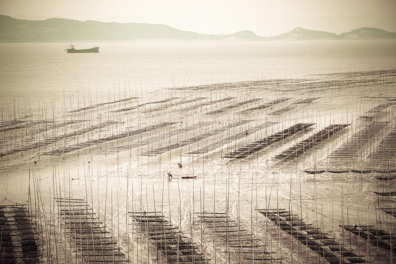 Intertidale Zonenlandschaft lizenzfreies stockbild