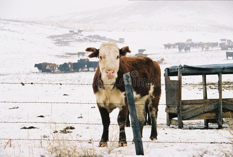 Intervallo di inverno fotografie stock libere da diritti