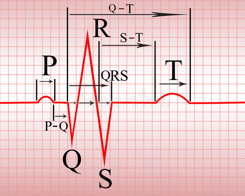 Intervals, compex of ECG vector illustration