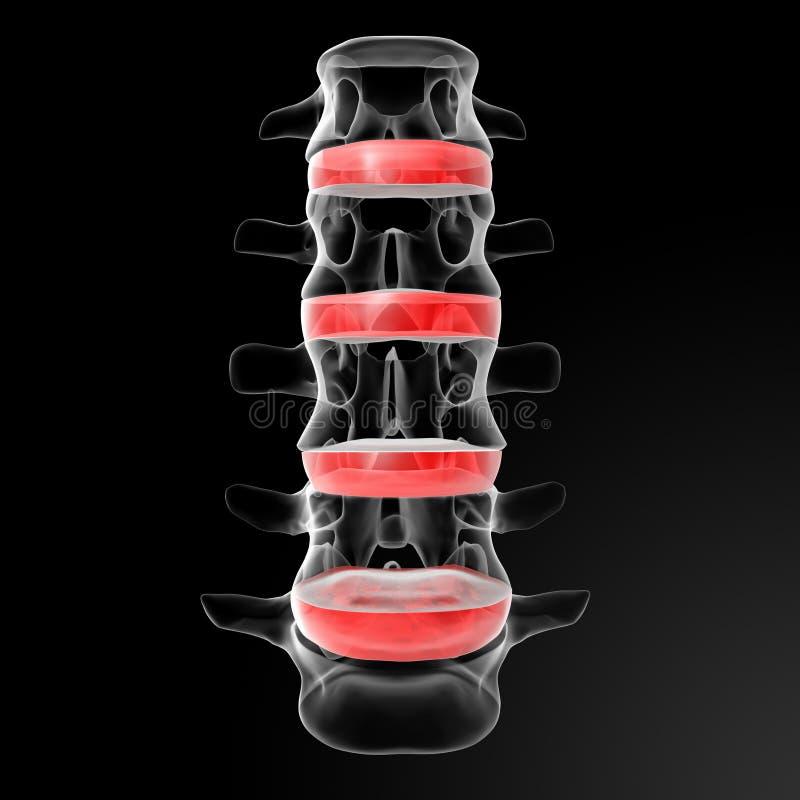 Intervertebral discs. 3d render human intervertebral discs - front view stock illustration