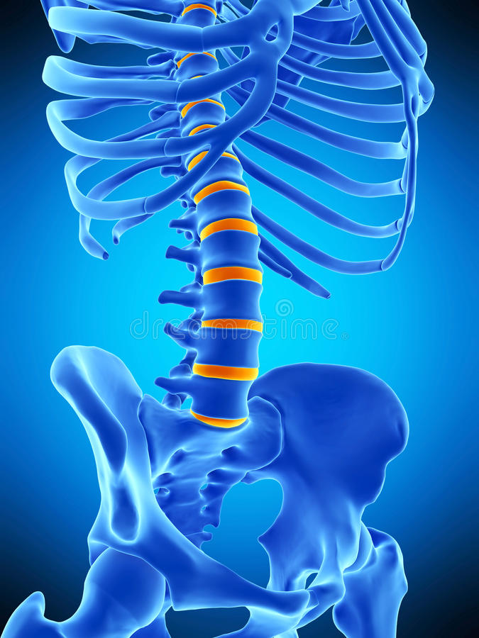 The intervertebral discs. Medically accurate illustration of the intervertebral discs royalty free illustration