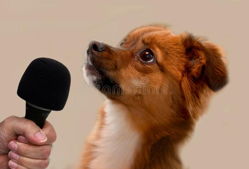 Interview with a little puppy dog royalty free stock images