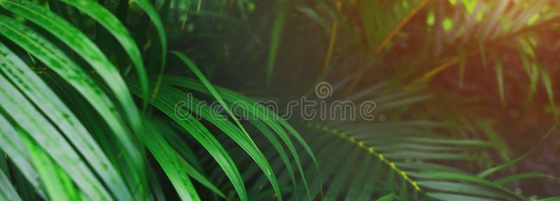 Intestazione del sito Web ed insegna delle foglie di palma e del sole tropicali immagini stock