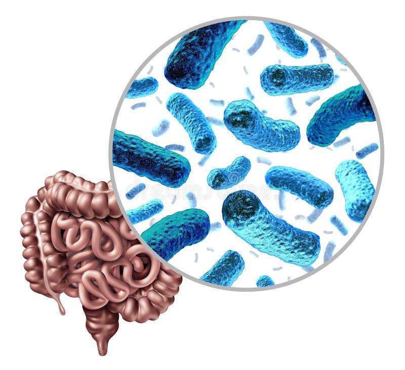 Intestin de bactéries illustration de vecteur