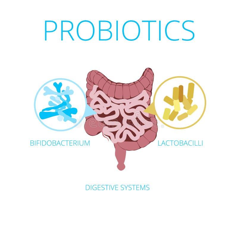 Intestinaal flora vectorconcept met probioticspictogrammen royalty-vrije illustratie