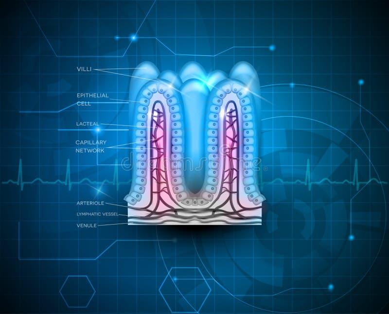 Intestinal villi blue technology background stock illustration