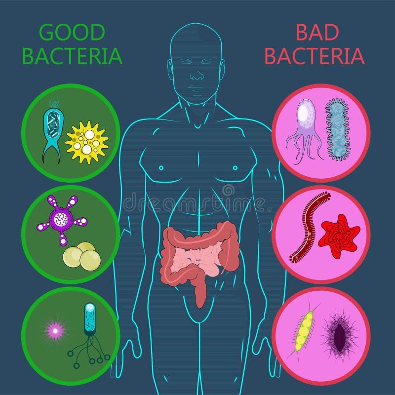 Intestinale Flora, Satz gute und schlechte Bakterien lizenzfreie abbildung