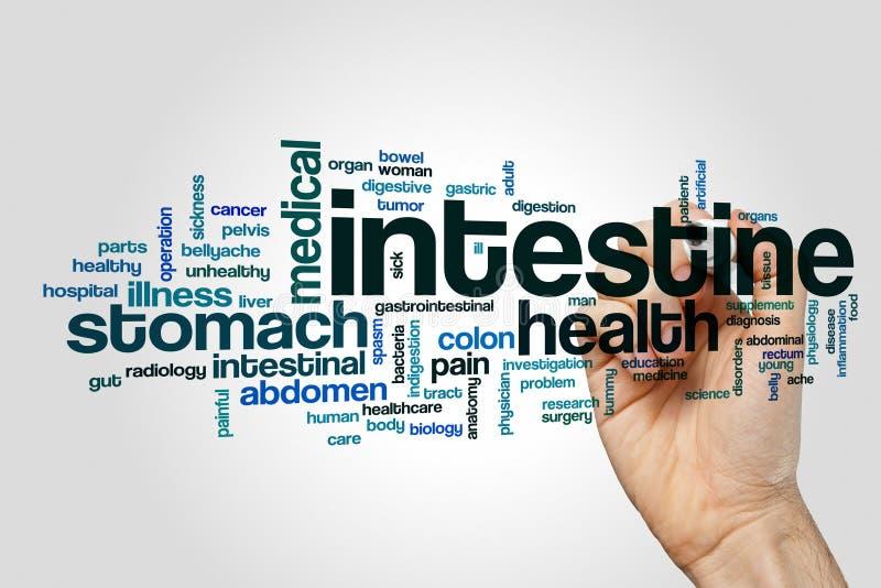 Intestine word cloud concept stock photo